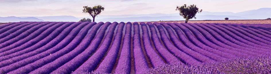 The enthralling countryside of Provence